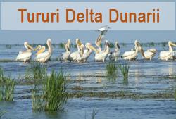 Tururi Delta Dunarii